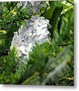 Hiding Hydrangea Metal Print