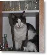 Hiding In The Cabinet Metal Print