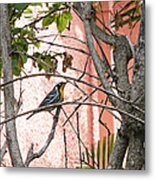 Hiding In The Gardens Metal Print