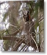 Hiding In The Trees Metal Print