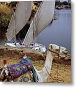 High Angle View Of A Camel Resting Metal Print