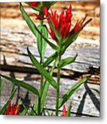 High Country Wildflowers Metal Print