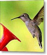 High Flying Hummingbird Metal Print
