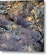Higher Ground Metal Print