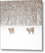 Highland Cattle In The Snow Metal Print