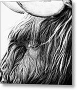 Highland Cow Mono Metal Print