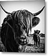 Highlander 1 Metal Print