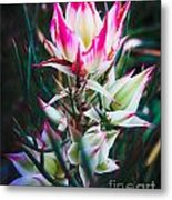 Highlighted Flower Metal Print