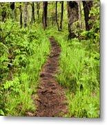 Hiking Through The Blue Ridge II Metal Print