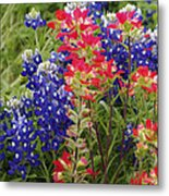 Hill Country Bloom Metal Print