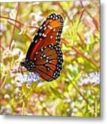 Hill Country Butterfly Metal Print