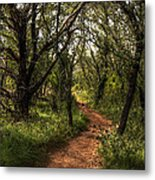 Hill Country Trail Metal Print