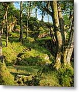 Hillside Forest Metal Print