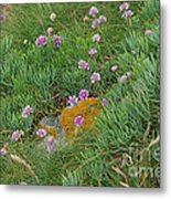 Hillside Of Wildflowers Metal Print