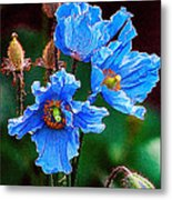 Himalayan Blue Poppy Flower Metal Print