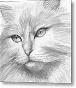 Himalayan Cat Metal Print