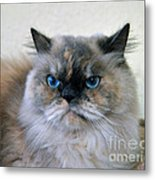 Himalayan Persian Cat Metal Print