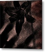 Hint Of A Lily Metal Print