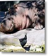 Hippo And Friend Metal Print