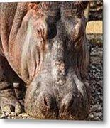 Hippo Mug Shot Metal Print