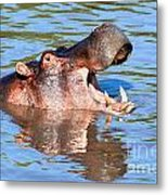 Hippo With Open Mouth In River. Serengeti. Tanzania Metal Print