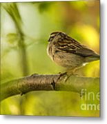 His Eye Is On The Sparrow Metal Print