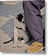 His Master's Foot Metal Print by Odd Jeppesen