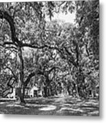 Historic Lane Bw Metal Print