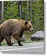 Hmmm .... What's On The Other Side Of The Road Today? Metal Print