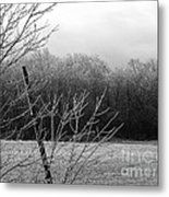 Hoar Frost On The Wood Metal Print
