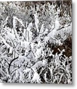 Hoarfrost 18  Metal Print