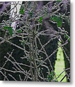 Hoars Frost-featured In Nature Photography Group Metal Print