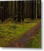 Hoh Rainforest Road Metal Print