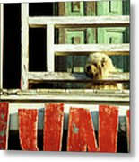 Hoi An Dog 02 Metal Print