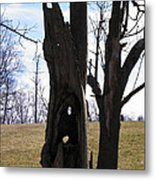 Holey Tree Trunk Metal Print