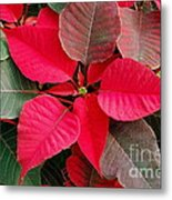 Holiday  Color Metal Print