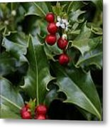 Holiday Holly Metal Print