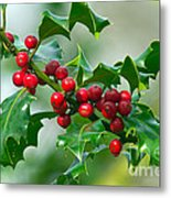 Holly Berries Metal Print by Sharon Talson