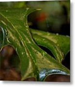 Holly Leaf Abstract Metal Print