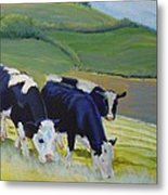 Holstein Friesian Cows Metal Print