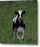 Holstein Hello Metal Print