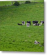 Holsteins Metal Print