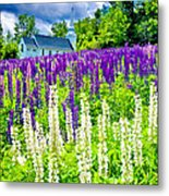 Holy Lupines Metal Print