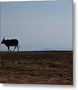 Homeward Bound Metal Print