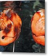 Homosassa Springs Flamingos 14 Metal Print