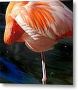 Homosassa Springs Flamingos 7 Metal Print