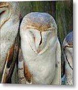 Homosassa Springs Snowy Owls 1 Metal Print