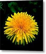 Honesty Metal Print by Lucy D