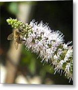 Honey Bee 3 Metal Print