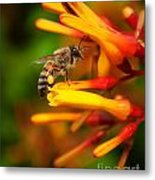 Honey Bee 4 Metal Print